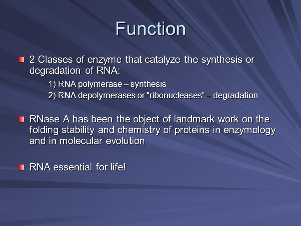 Function 2 Classes of enzyme that catalyze the synthesis or degradation of RNA: 1) RNA polymerase – synthesis.