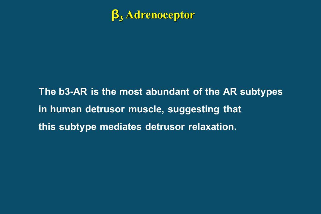 β3 Adrenoceptor The b3-AR is the most abundant of the AR subtypes