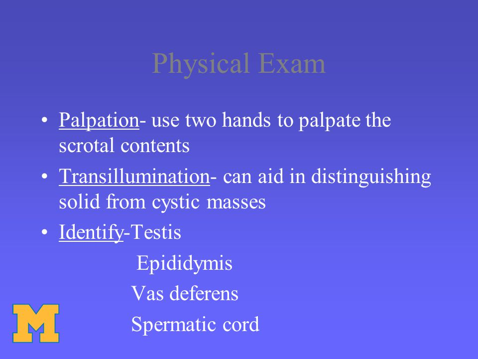 Physical Exam Palpation- use two hands to palpate the scrotal contents