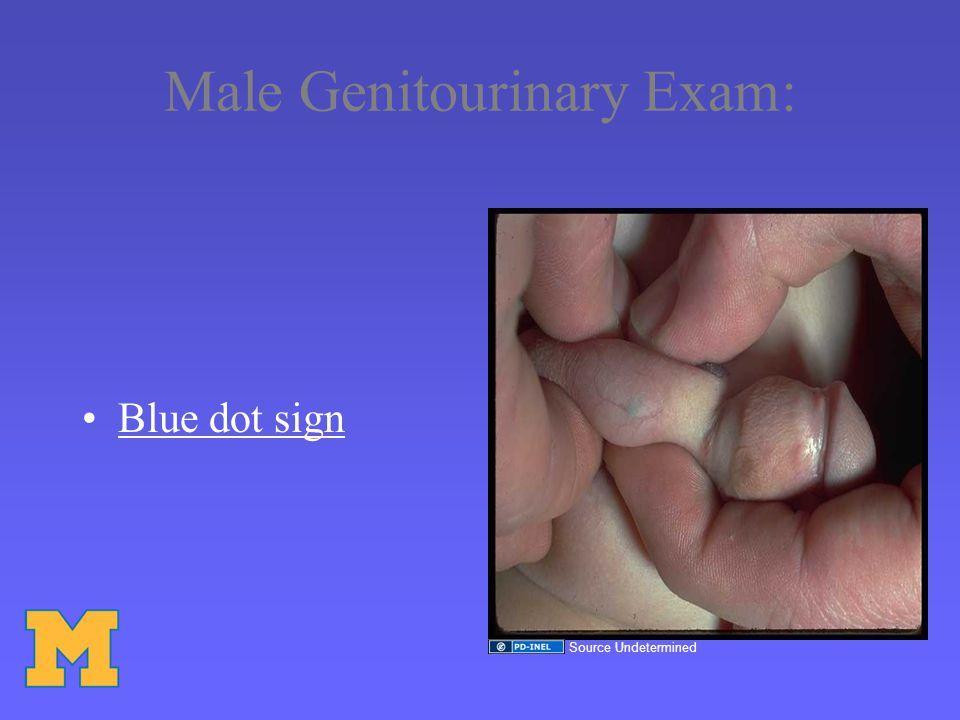 Male Genitourinary Exam: