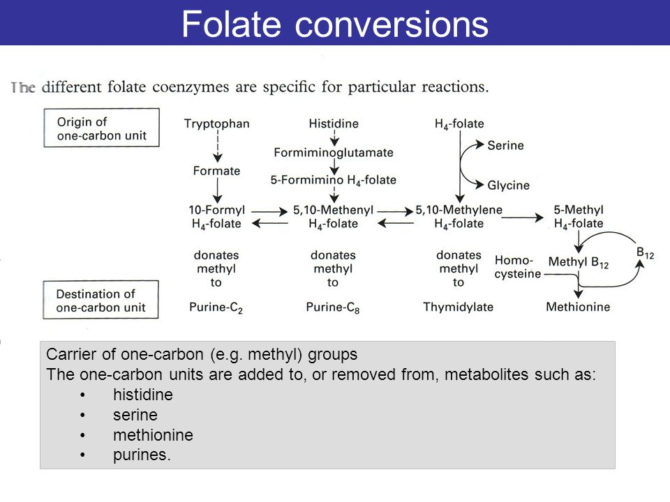 Folate conversions Carrier of one-carbon (e.g. methyl) groups