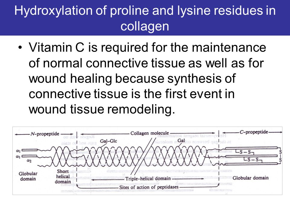 Hydroxylation of proline and lysine residues in collagen