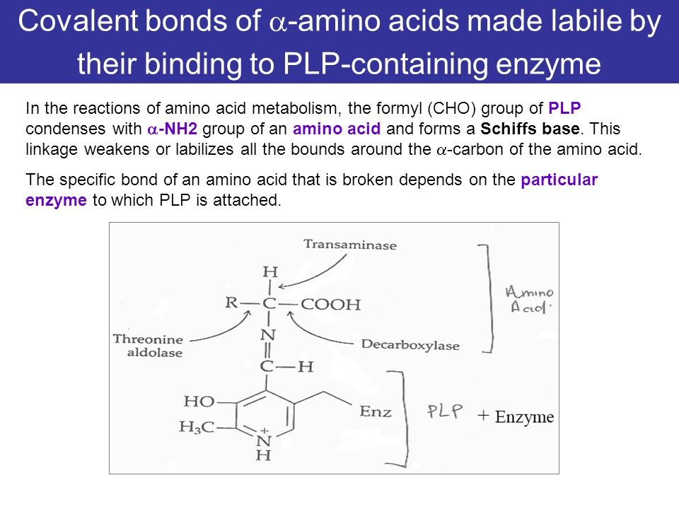 Covalent bonds of -amino acids made labile by their binding to PLP-containing enzyme
