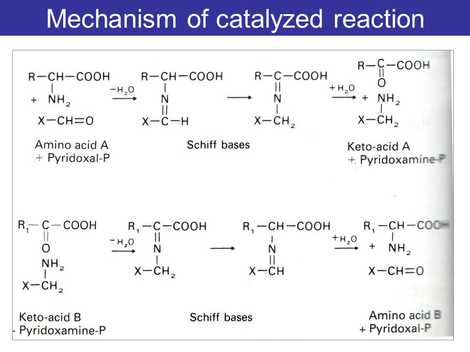 Mechanism of catalyzed reaction