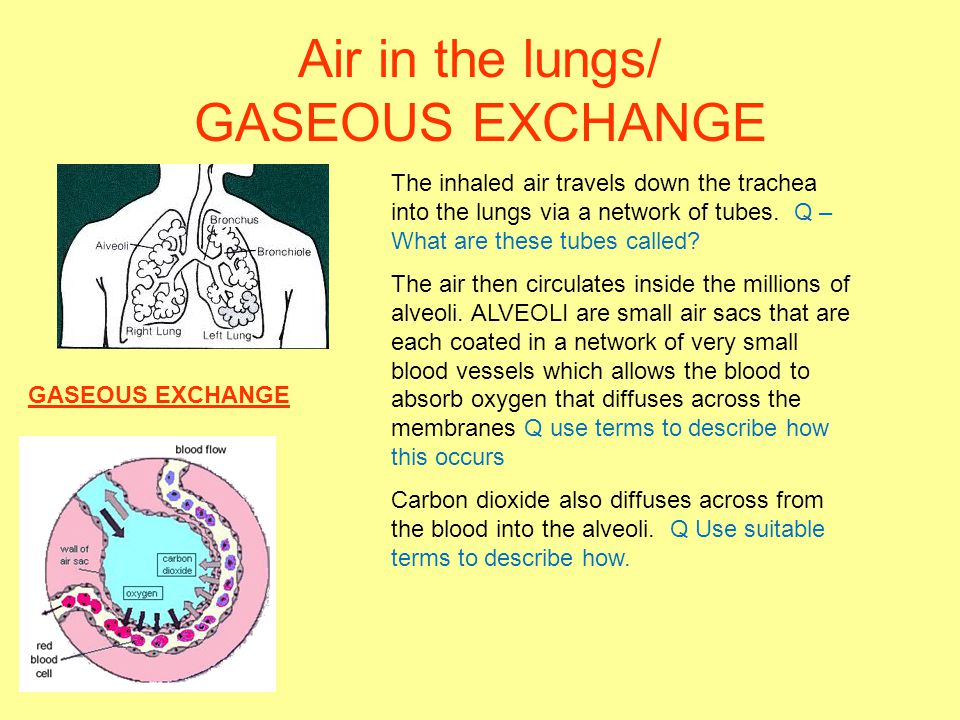 Air in the lungs/ GASEOUS EXCHANGE