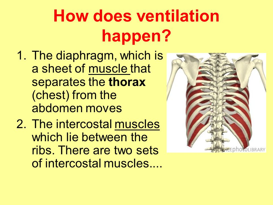 How does ventilation happen