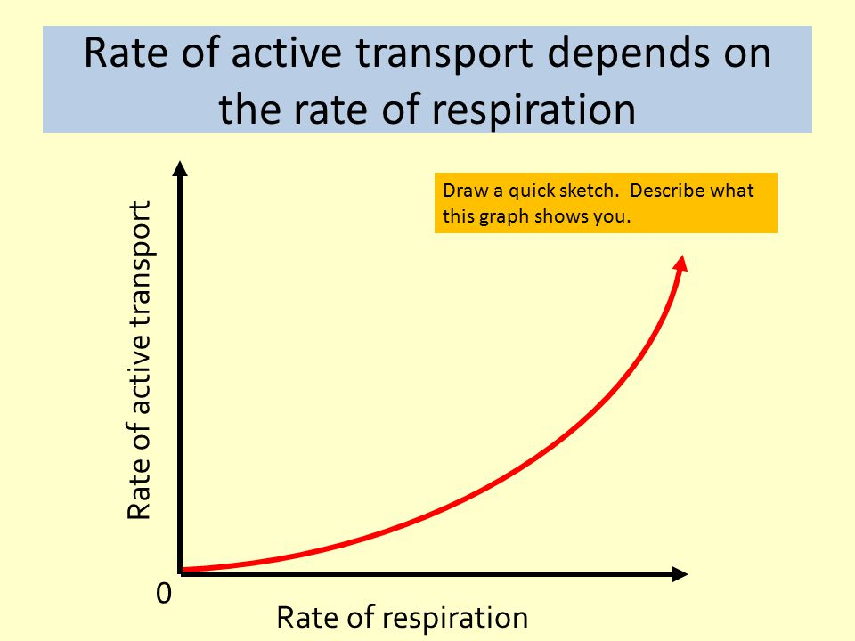 Rate of active transport depends on the rate of respiration