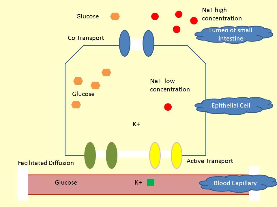 Lumen of small Intestine