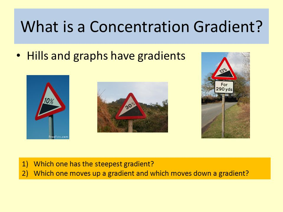 What is a Concentration Gradient