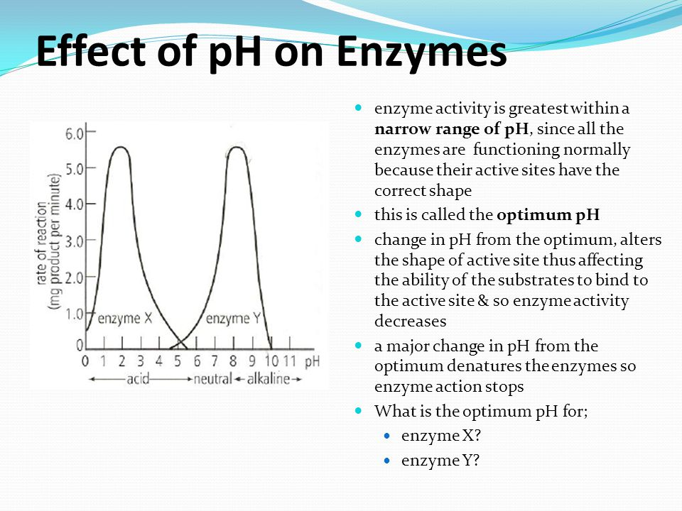Effect of pH on Enzymes