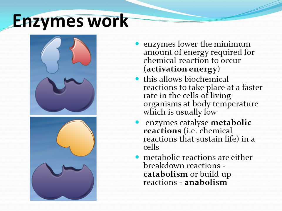 Enzymes work enzymes lower the minimum amount of energy required for chemical reaction to occur (activation energy)