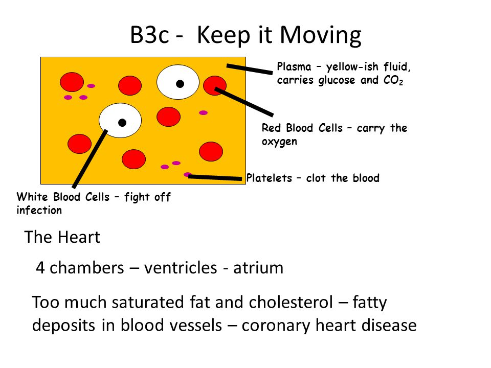 B3c - Keep it Moving The Heart 4 chambers – ventricles - atrium