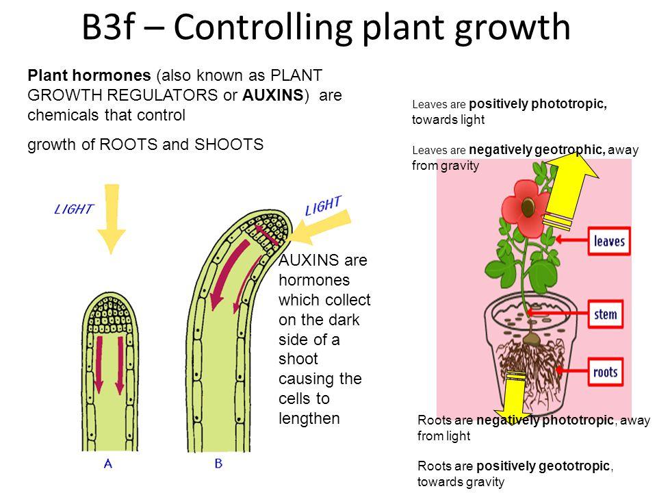 B3f – Controlling plant growth
