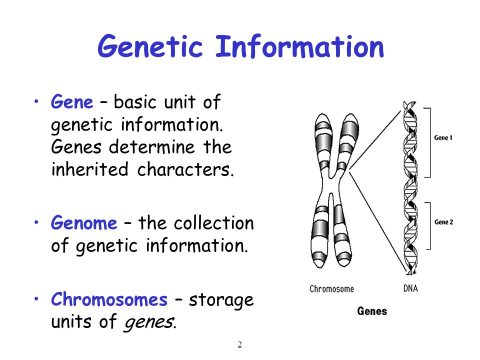 Genetic Information Gene – basic unit of genetic information. Genes determine the inherited characters.