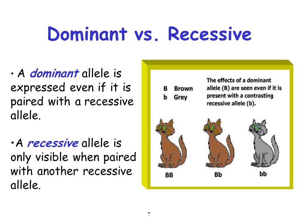 Dominant vs. Recessive A dominant allele is expressed even if it is paired with a recessive allele.