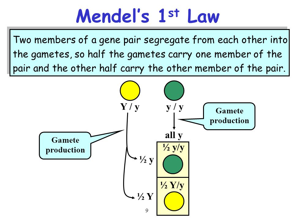Mendel's 1st Law Two members of a gene pair segregate from each other into. the gametes, so half the gametes carry one member of the.