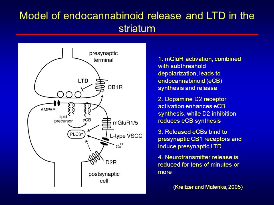 Model of endocannabinoid release and LTD in the striatum