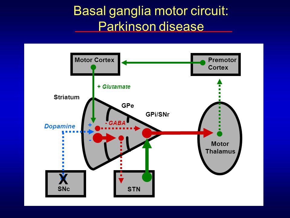 Basal ganglia motor circuit: