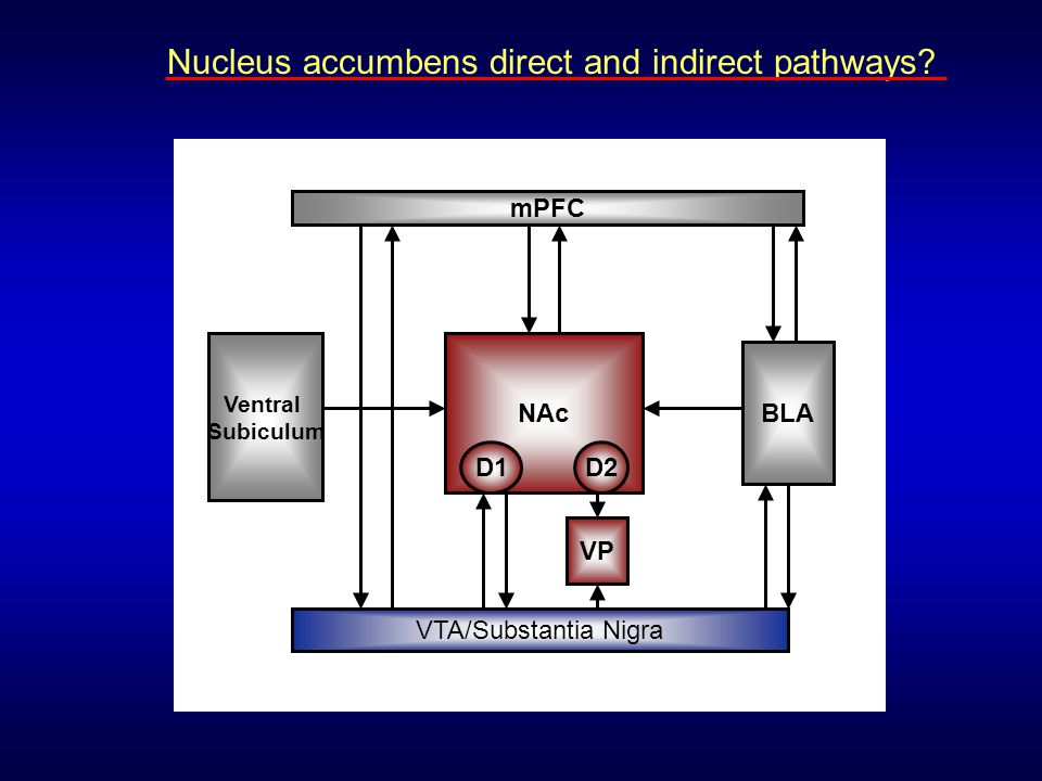 Nucleus accumbens direct and indirect pathways