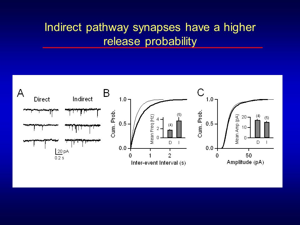 Indirect pathway synapses have a higher