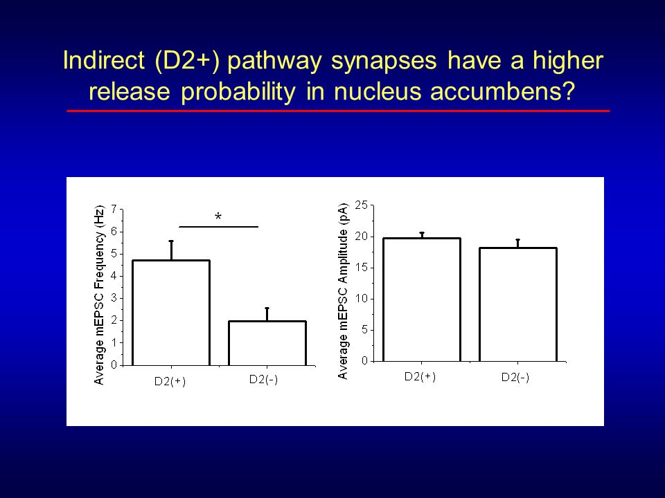 Indirect (D2+) pathway synapses have a higher