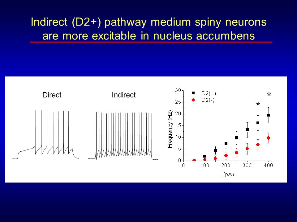 Indirect (D2+) pathway medium spiny neurons are more excitable in nucleus accumbens