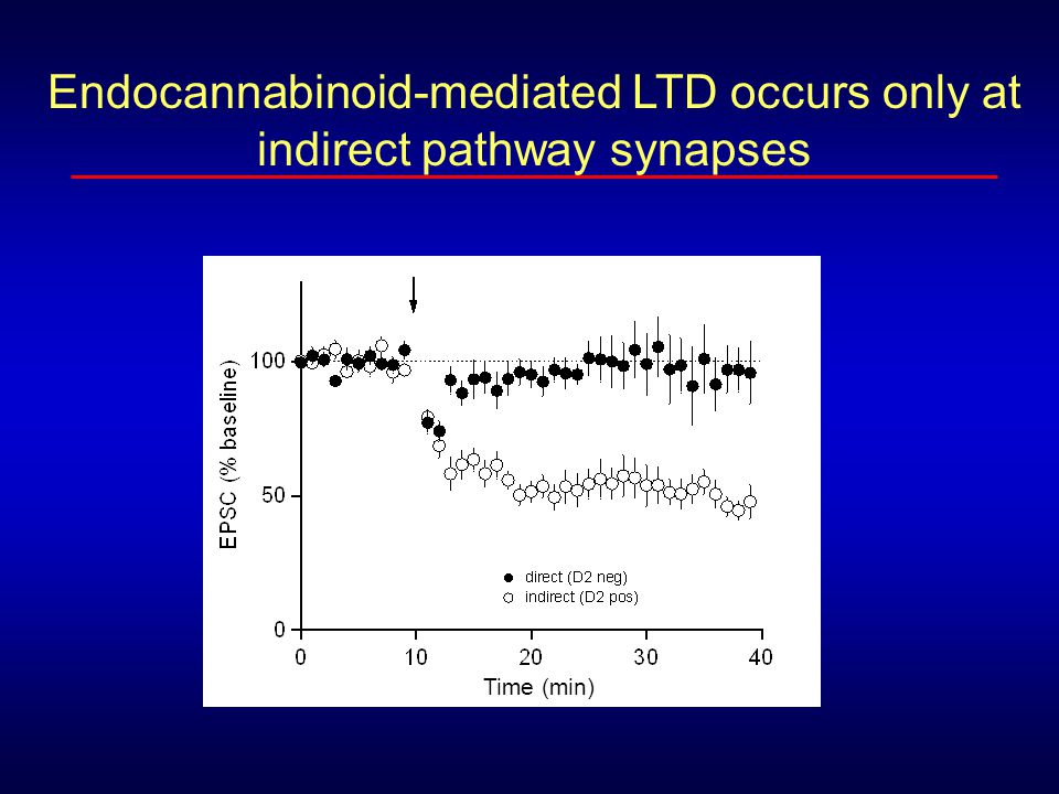 Endocannabinoid-mediated LTD occurs only at indirect pathway synapses