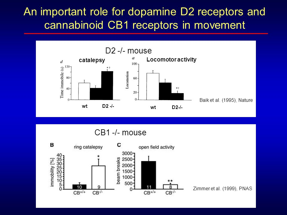 An important role for dopamine D2 receptors and cannabinoid CB1 receptors in movement