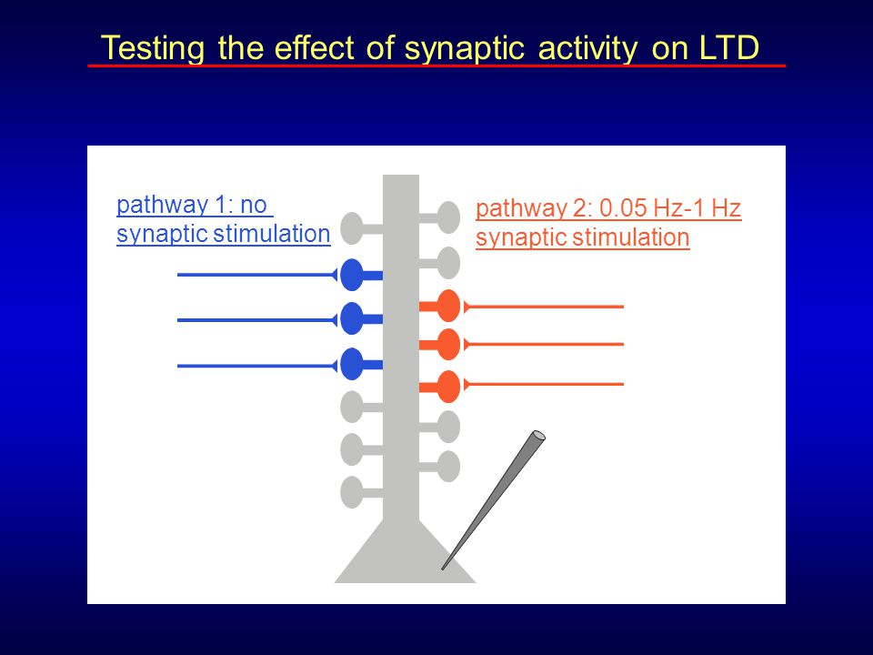 Testing the effect of synaptic activity on LTD