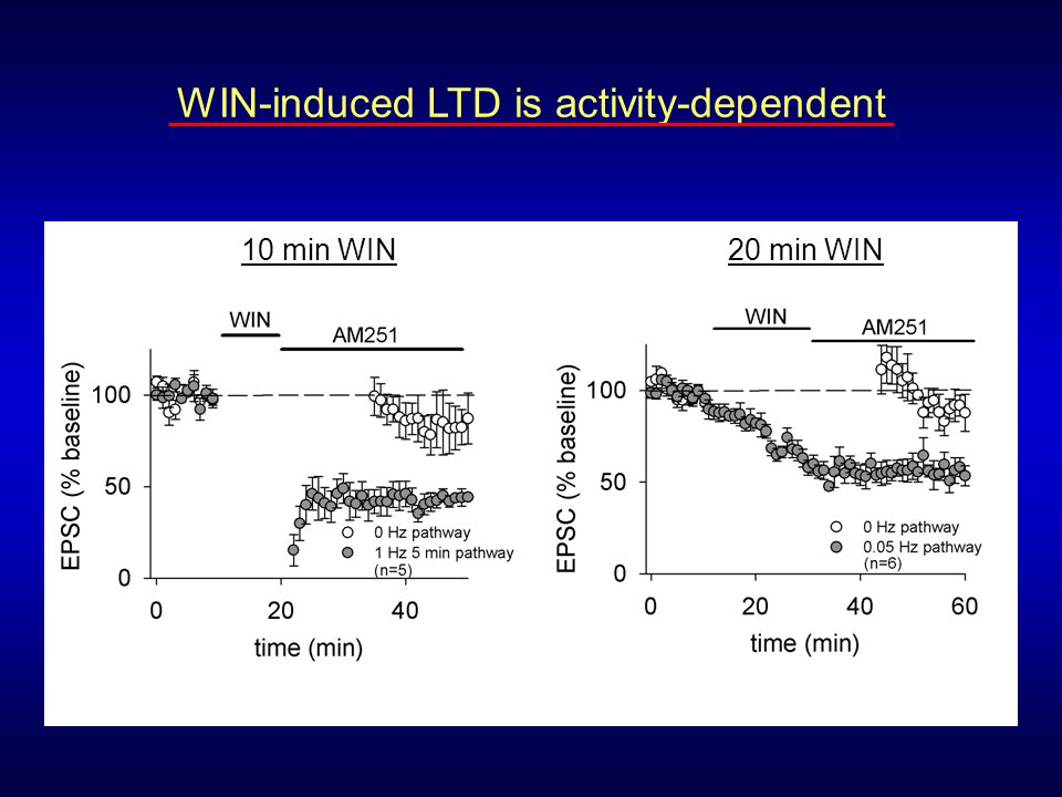 WIN-induced LTD is activity-dependent
