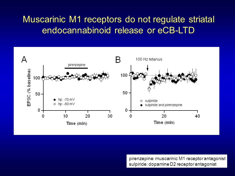Muscarinic M1 receptors do not regulate striatal endocannabinoid release or eCB-LTD