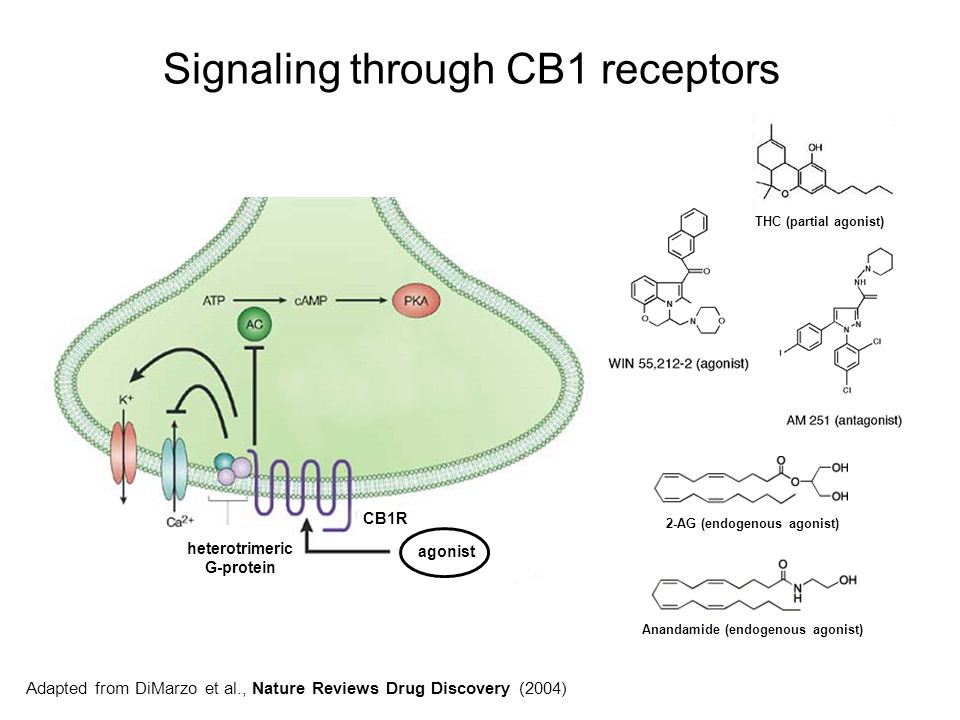 Signaling through CB1 receptors
