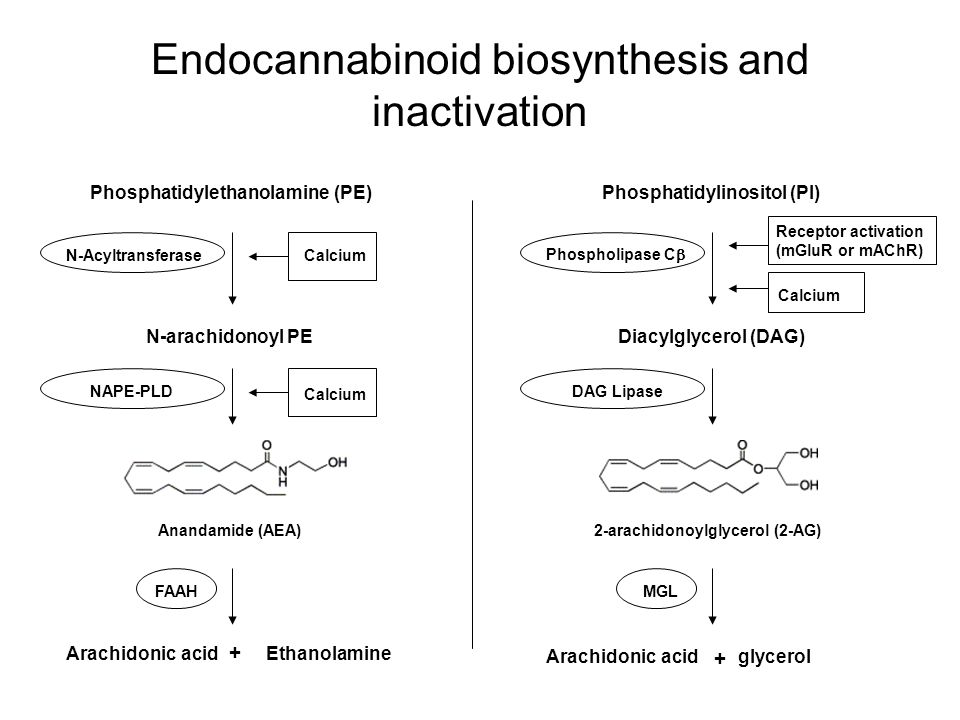 Endocannabinoid biosynthesis and inactivation
