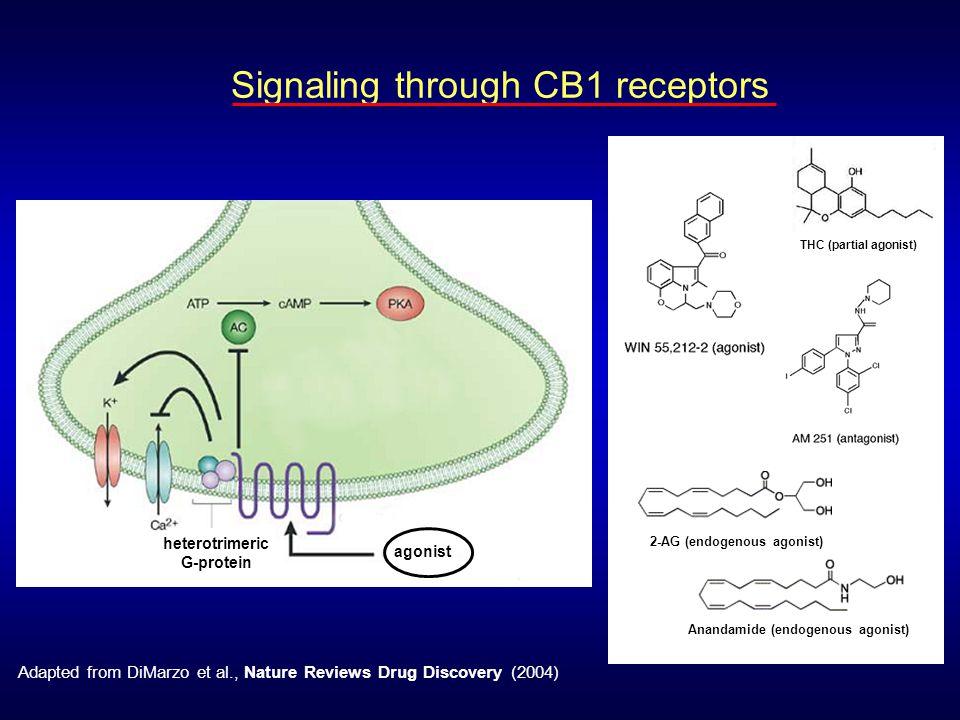 heterotrimeric G-protein
