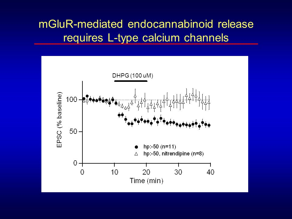 mGluR-mediated endocannabinoid release requires L-type calcium channels