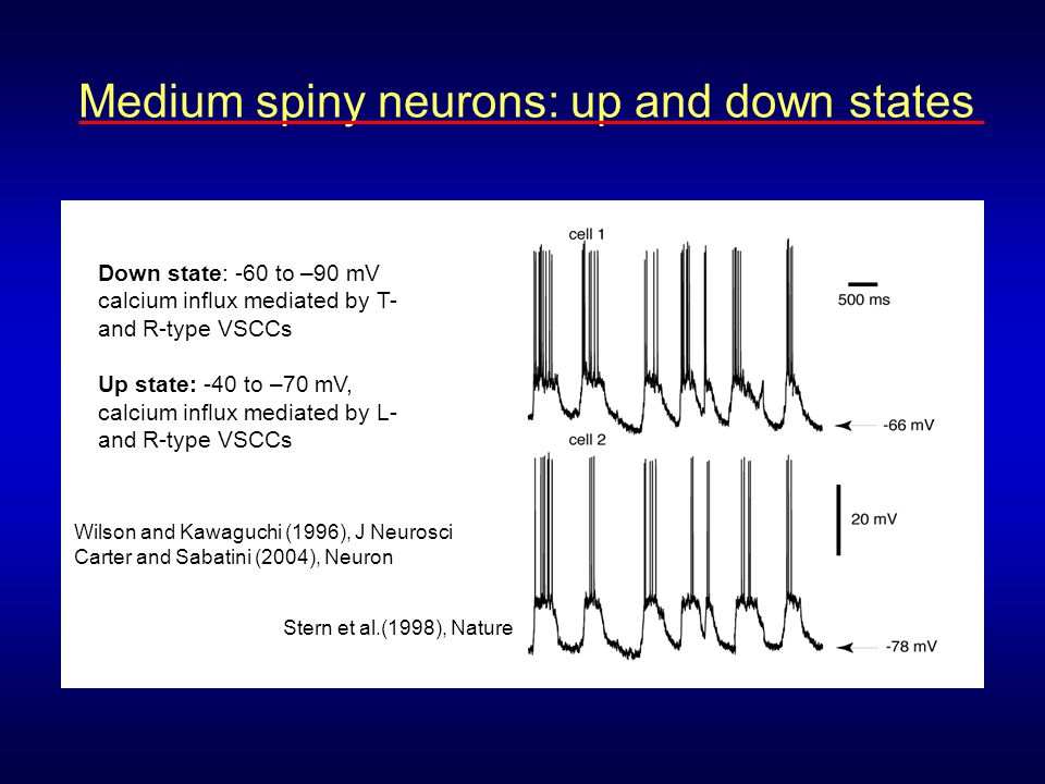Medium spiny neurons: up and down states