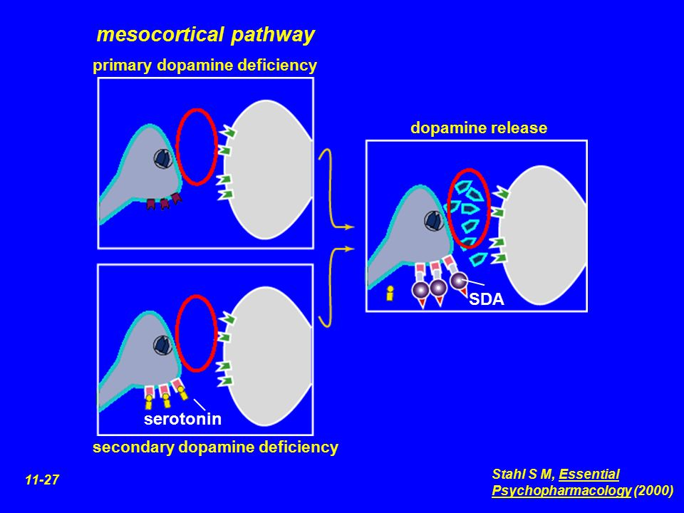 mesocortical pathway SDA serotonin primary dopamine deficiency