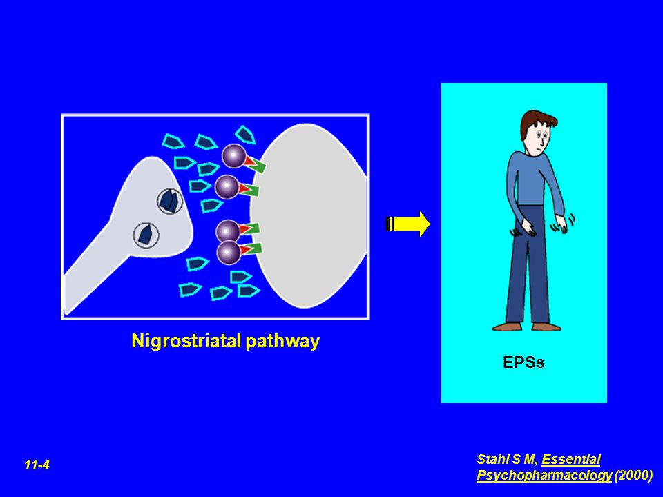 Nigrostriatal pathway