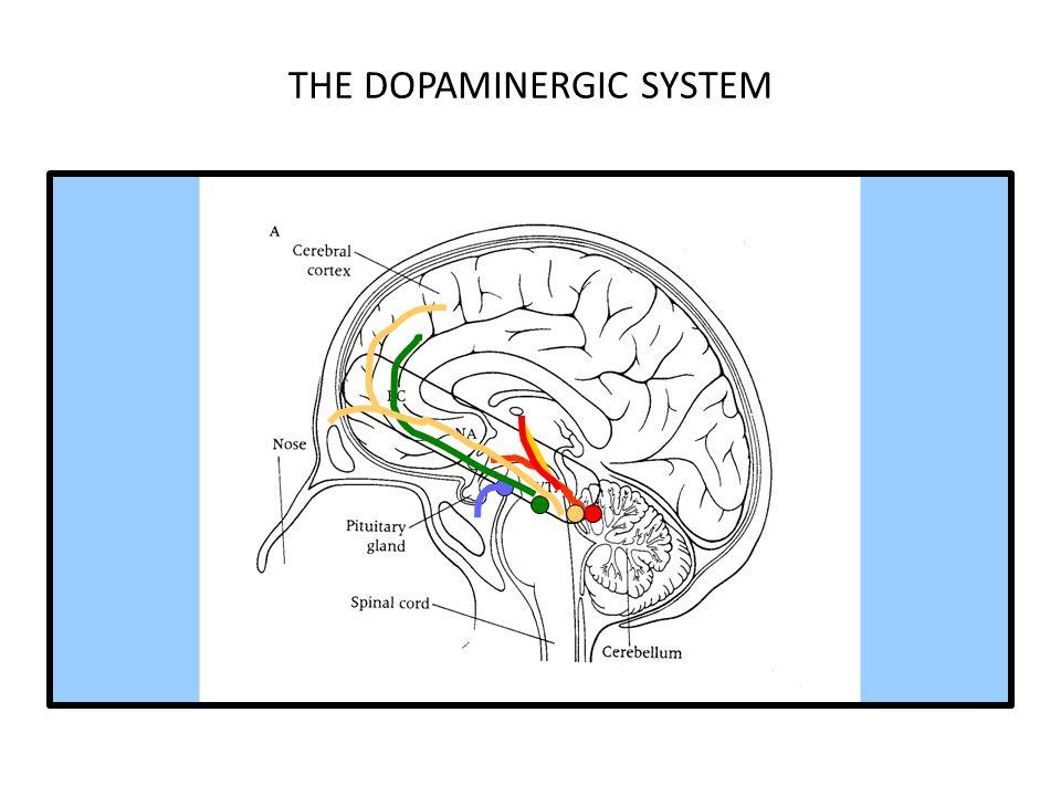 THE DOPAMINERGIC SYSTEM