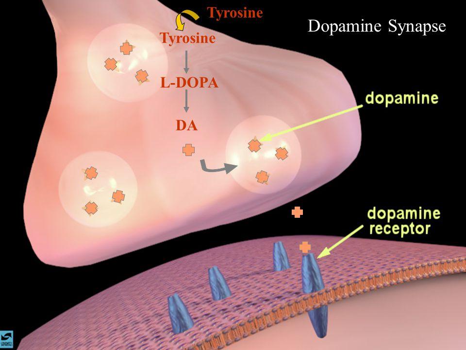 Dopamine Synapse Tyrosine Tyrosine L-DOPA DA