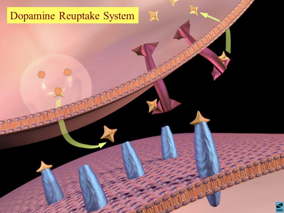 Dopamine Reuptake System