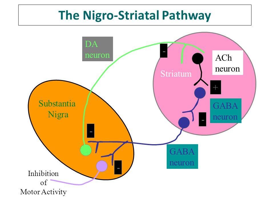The Nigro-Striatal Pathway