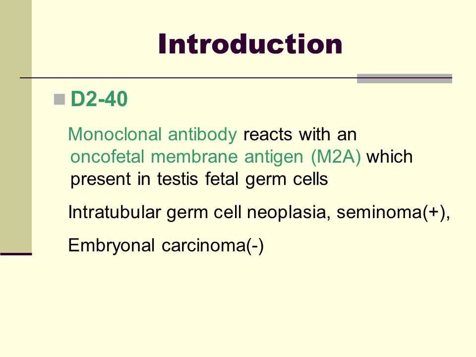 Introduction D2-40. Monoclonal antibody reacts with an oncofetal membrane antigen (M2A) which present in testis fetal germ cells.