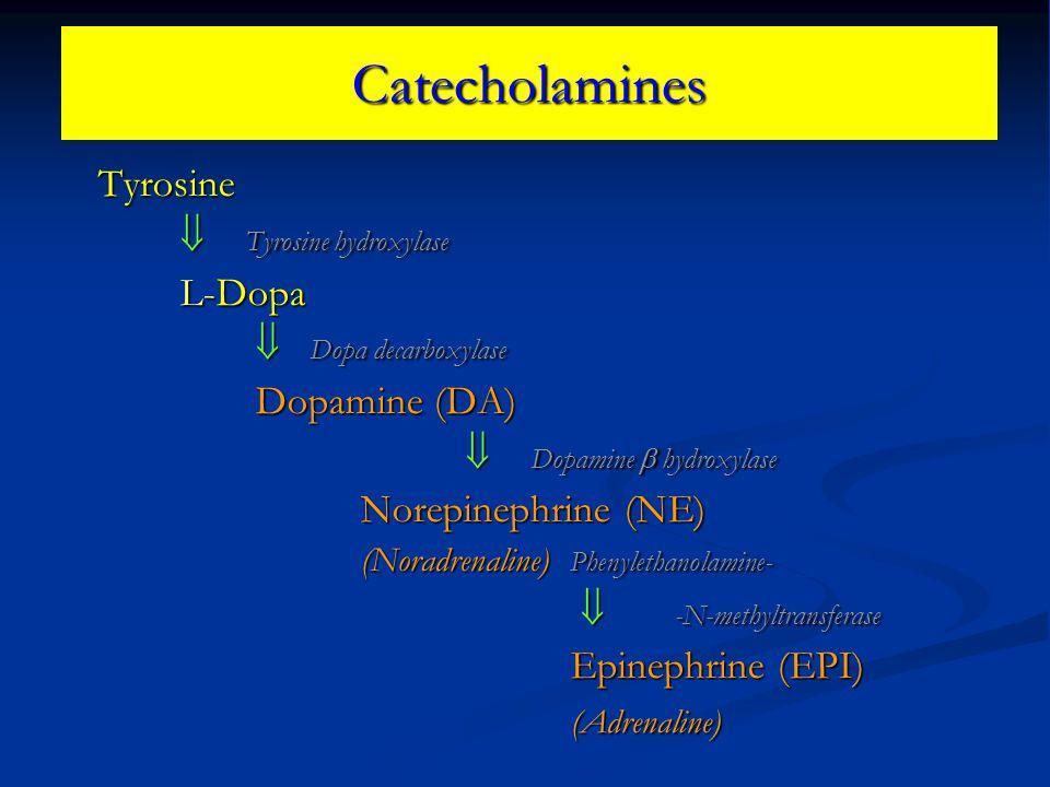 Catecholamines Tyrosine  Tyrosine hydroxylase L-Dopa