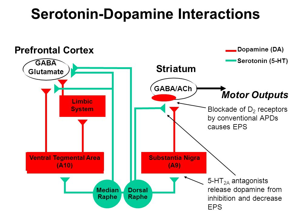 Serotonin-Dopamine Interactions Ventral Tegmental Area (A10)
