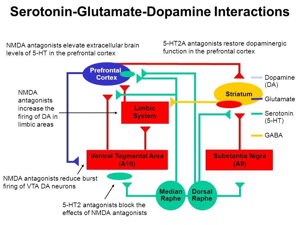 Serotonin-Glutamate-Dopamine Interactions Ventral Tegmental Area (A10)