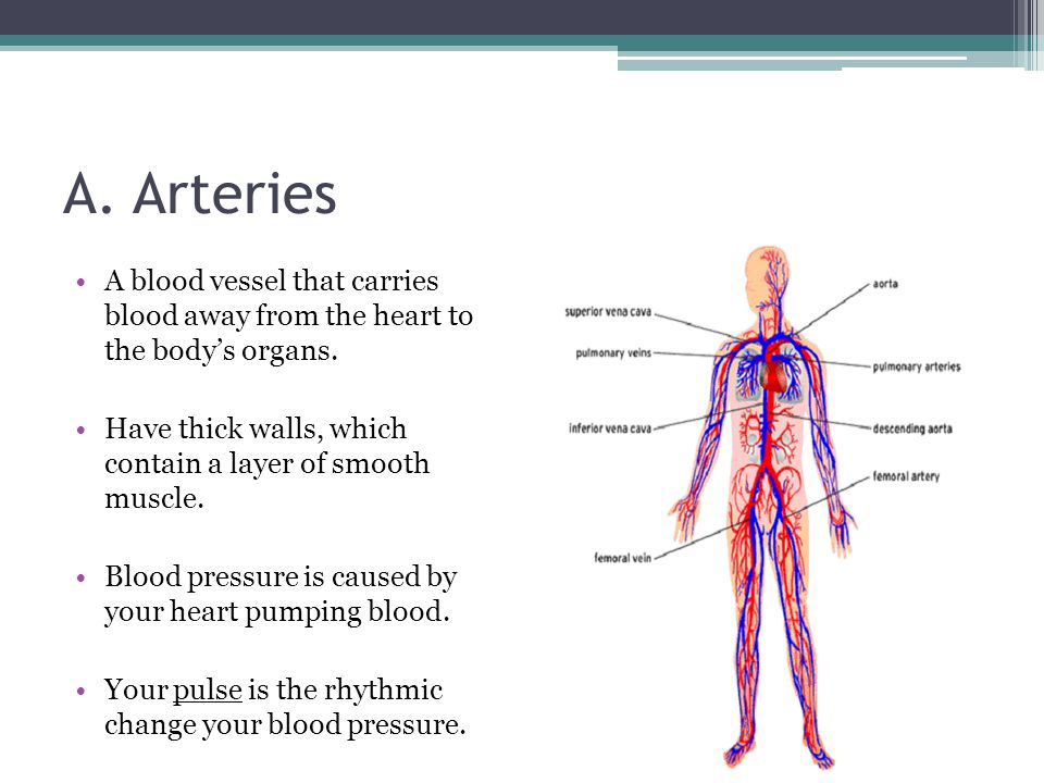A. Arteries A blood vessel that carries blood away from the heart to the body's organs.