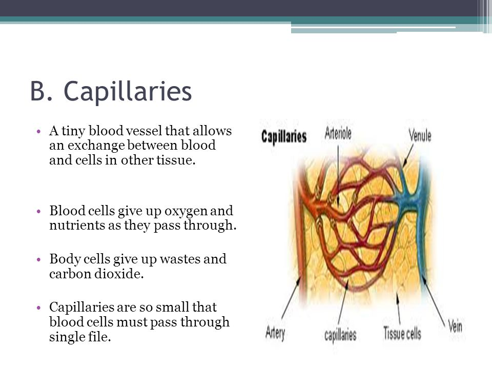 B. Capillaries A tiny blood vessel that allows an exchange between blood and cells in other tissue.
