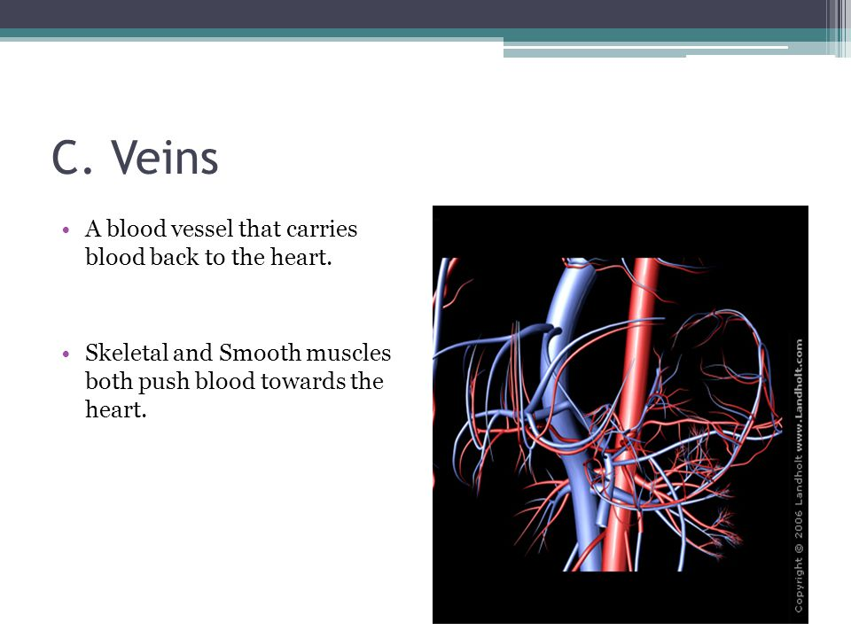 C. Veins A blood vessel that carries blood back to the heart.