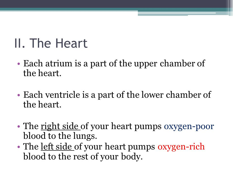 II. The Heart Each atrium is a part of the upper chamber of the heart.